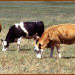 Охотхозяйстве маралы